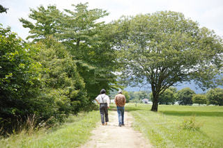 女性,男性,2人,自然,夏,木,太陽,森,緑,後ろ姿,歩く,散歩,林,日差し,人物,背中,人,後姿,おじいちゃん,お散歩,おじいさん,老人