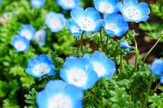小さな青の写真・画像素材[2246137]