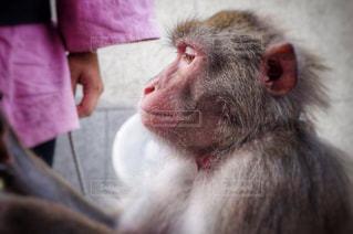 猿のクローズアップの写真・画像素材[2279963]