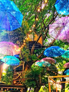 カラフルな傘 ツリーハウス!の写真・画像素材[2343426]