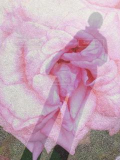 バラに包まれての写真・画像素材[2274864]