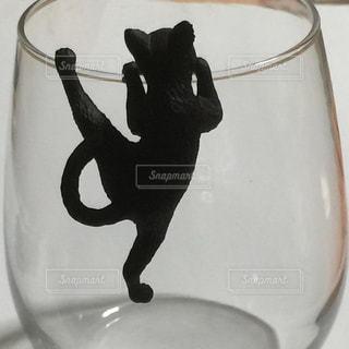 グラスを覗くネコの写真・画像素材[2292021]