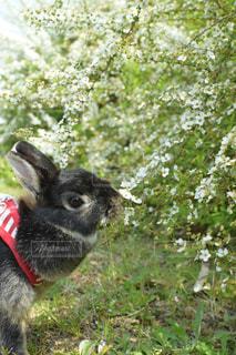 動物,うさぎ,お花,ペット,可愛い,お散歩,晴れの日,バニー