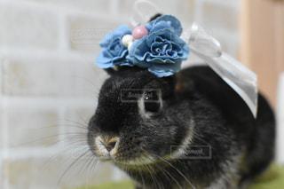 帽子をかぶった猫のクローズアップの写真・画像素材[2416155]