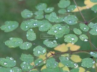 雨上がりの朝の写真・画像素材[2165692]