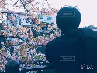 カメラ,桜,後ろ姿,花見,撮影,デート