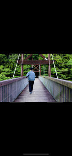 公園,橋,緑,散歩,レジャー,お散歩,外出