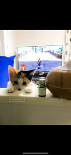 テーブルに乗りこっちを見る子猫の写真・画像素材[2294203]
