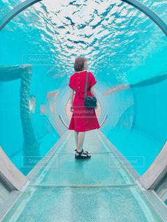 水族館デートの写真・画像素材[2165255]