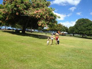 公園,屋外,親子,青空,後ろ姿,景色,樹木,新緑,ハワイ,姉妹,遊び場,草木,日中