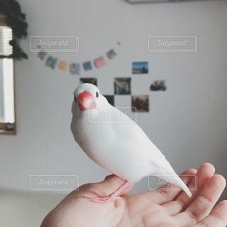 鳥を抱く手の写真・画像素材[2700052]