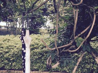 自然,雨,傘,屋外,水,樹木,雫,雨の日