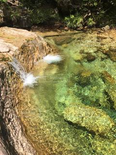 森林,透明,川,水面,山,滝,岩