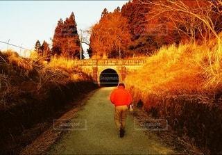 男性,家族,風景,冬,後ろ姿,散歩,樹木,人物,背中,道,人,後姿,トンネル