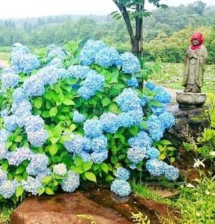 花,雨,屋外,水色,草,紫陽花,可愛い,rain,梅雨,天気,Cute,草木,雨の日,お地蔵さん,緑色,お地蔵さま