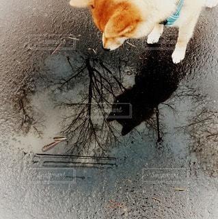 水溜まりを見つめているワンちゃんの写真・画像素材[2223940]