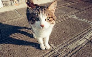 我輩は猫である…の写真・画像素材[2292779]