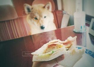 見つめる愛犬の写真・画像素材[2484180]