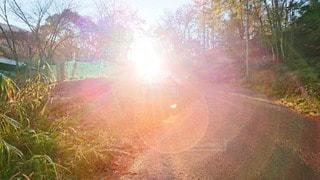 自然,空,森林,屋外,太陽,朝日,日光,光,草,樹木,フォトジェニック,インスタ映え