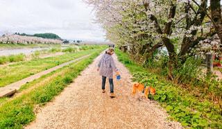 桜並木を見ながら楽しいお散歩の写真・画像素材[4221582]