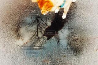 水溜まりを見ている愛犬の写真・画像素材[4464980]