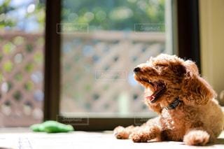 窓の前に座っているクマのクローズアップの写真・画像素材[3000605]