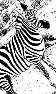 白×黒の写真・画像素材[2169119]