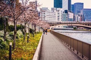 桜,カップル,屋外,後ろ姿,人物,背中,人,後姿,ほのぼの