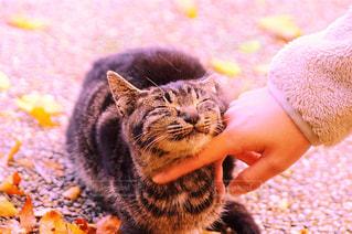 猫の写真・画像素材[251461]