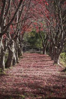 フォレスト内のツリーの写真・画像素材[875414]