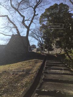古の階段の写真・画像素材[2173771]