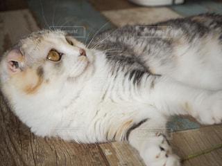 猫のクローズアップの写真・画像素材[2333719]