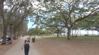 海,公園,木,屋外,ビーチ,散歩,ハワイ,レジャー,ワイキキ,お散歩,ライフスタイル,おでかけ