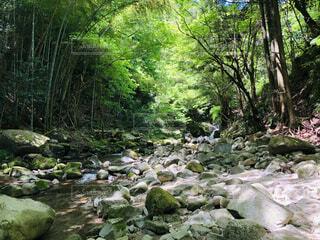 森の中の滝の写真・画像素材[4414517]