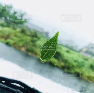 緑,葉っぱ