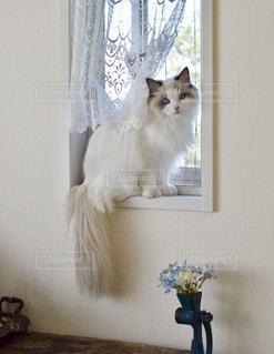 窓の外をチェック中の写真・画像素材[2171612]