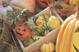ハロウィンのかぼちゃたちの写真・画像素材[2501295]