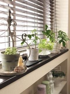窓際に観葉植物を並べて❤︎の写真・画像素材[2722943]
