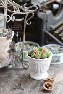 ヴィンテージのテーブルにお気に入りの多肉植物と雑貨を飾っての写真・画像素材[2735616]