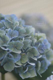 花のクローズアップの写真・画像素材[3376506]