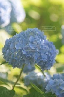 花のクローズアップの写真・画像素材[3376637]