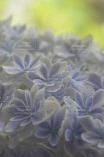 花のクローズアップの写真・画像素材[3378206]