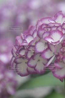花のクローズアップの写真・画像素材[3378638]