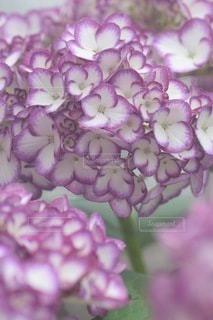 花のクローズアップの写真・画像素材[3378703]