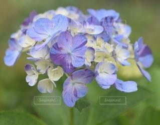 花のクローズアップの写真・画像素材[3378712]