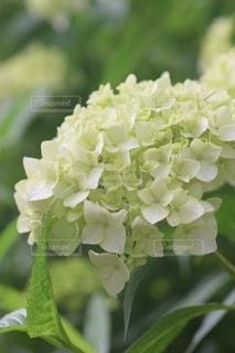 花のクローズアップの写真・画像素材[3379097]