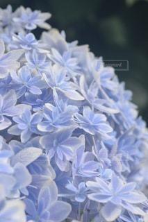 花のクローズアップの写真・画像素材[3379131]