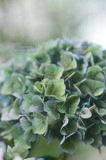 植物のクローズアップの写真・画像素材[3435830]