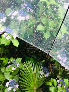 傘,グラフィック,青,ぼかし,明るい,しずく,レイン,雨、
