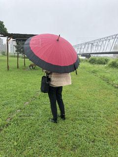 骨多い傘の写真・画像素材[2219548]